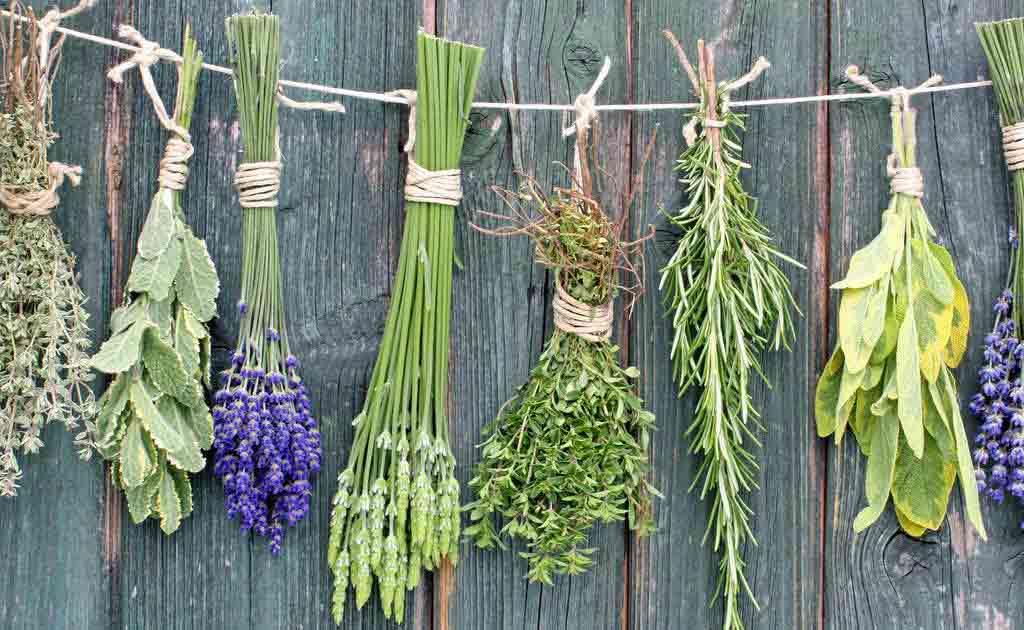 рослини