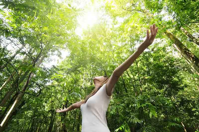 дерева-цілителі, дерева-донори, дерева-вампіри