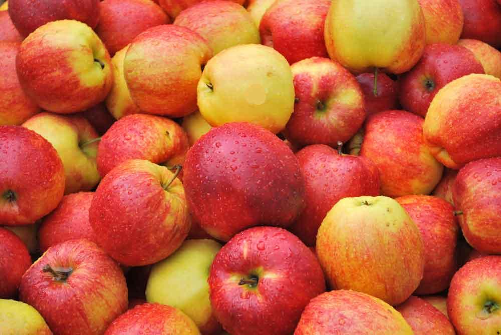 яблоко, яблоки, свойства яблок, польза яблок